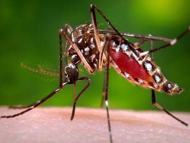 Wirus Zika wystraszył Brazylijki